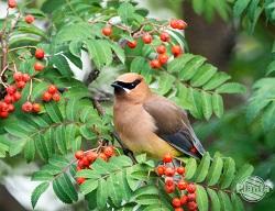 Rośliny to naturalna stołówka dla ptaków