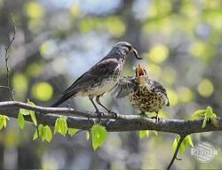 Ptaki w ogrodzie mogą być naszymi sprzymierzeńcami