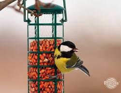 Karmniki zapewniają ptakom dostęp do pożywienia zimą