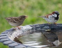 Ptaki potrzebują wody aby gasić pragnienie oraz pielęgnować upierzenie