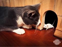 Kot to naturalny wróg gryzoni