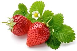 Owoce truskawek zbieramy systematycznie w miarę ich dojrzewania