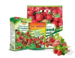 Na rynku dostępne są nawozy dedykowane do uprawy truskawek i poziomek.