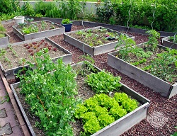 Podwyższone rabaty to dobry pomysł na warzywnik