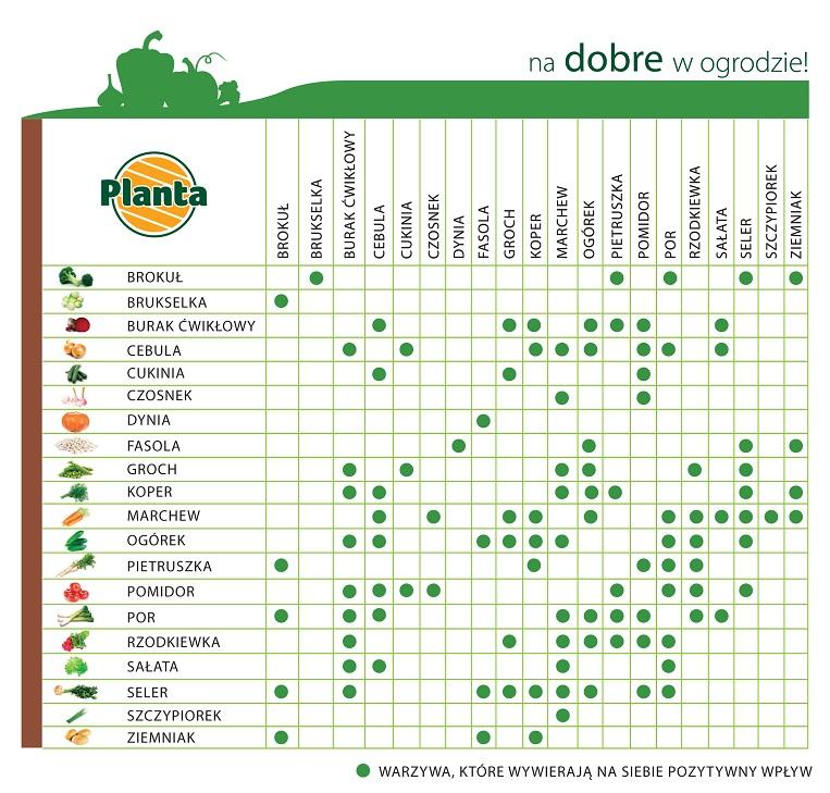 Zależności pomiędzy roślinami na grządce warzywnej