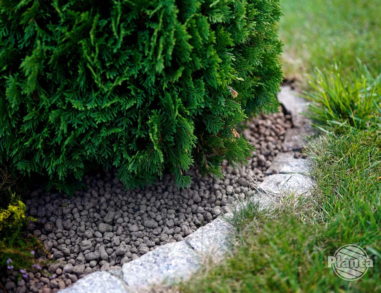 Keramzyt jako materiał ściółkujący w ogrodzie