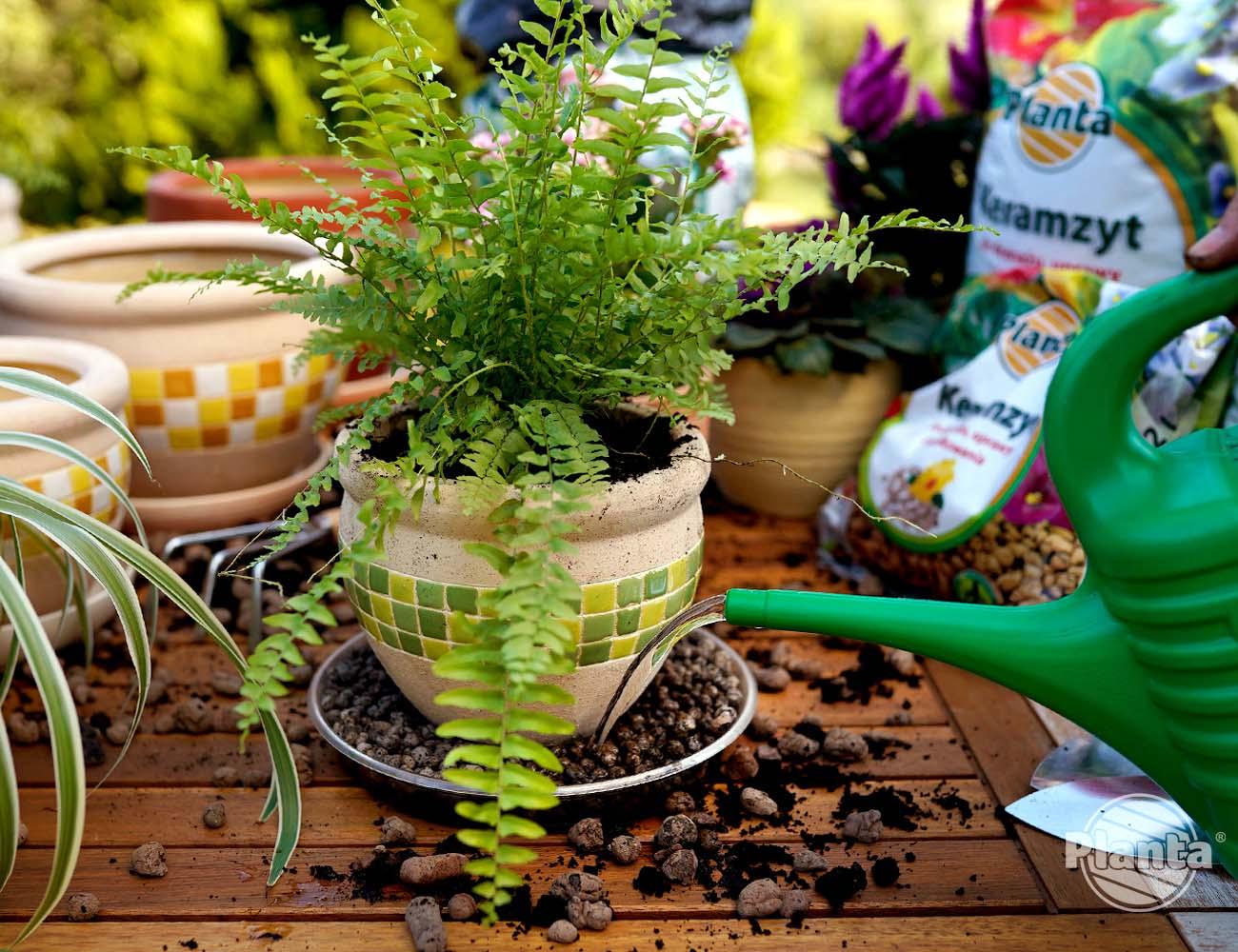 Keramzyt wysypujemy na podstawek na którym stoi roślina