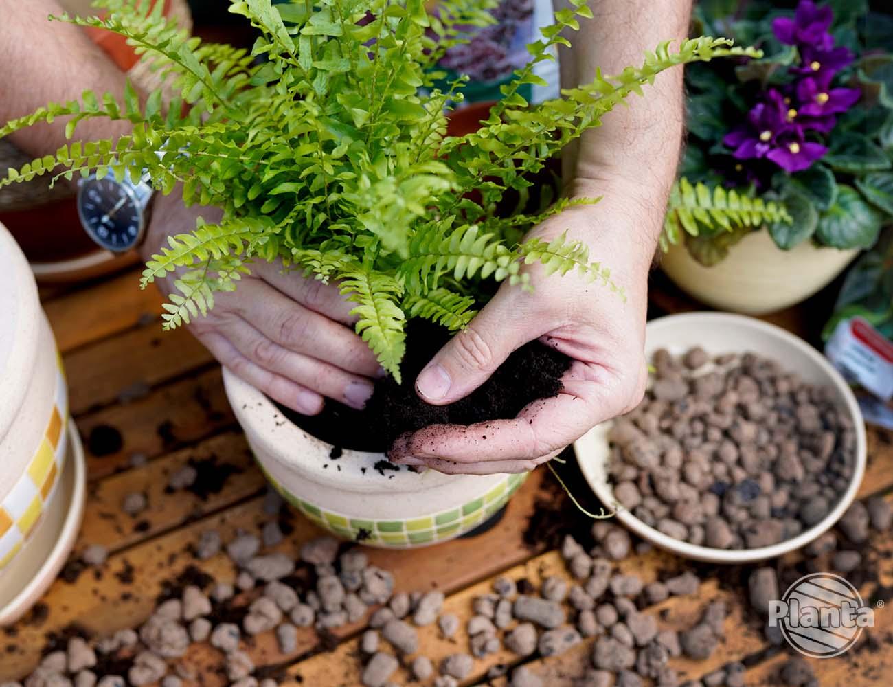 Umieszczamy roślinę w nowej doniczce