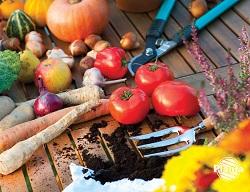Rośliny, które były zasilane biohumusem zawierają mniej metali ciężkich i azotanów, przez co mają lepsze walory smakowe.