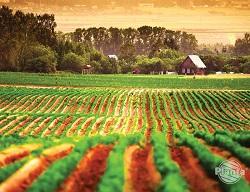 Fertilizarea de bază este furnizarea de îngrășământ în timpul pregătirii substratului.