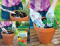 Furnizarea de îngrășăminte în timpul sezonului de creștere este o fertilizare aprofundată.