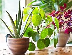 Odpowiednia ilość światła i właściwa temperatura pozwoli roślinom przetrwać zimowe miesiące.