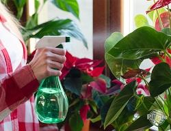 Aby pomóc roślinom przetrwać zimę musimy zadbać o zwiększenie wilgotności.