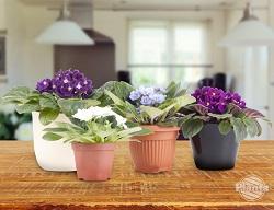 Brak kolorów za oknem chętnie rekompensujemy sobie kupując kwitnące kwity doniczkowe.