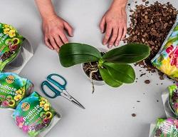 Pregătim o oală, substrat, foarfece speciale de grădină sau tăietor