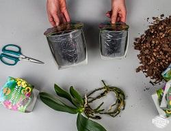 Pentru orhidee, ghivecele transparente cu fundul profilat corespunzător sunt cele mai bune