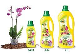 După câteva săptămâni, putem începe să hrănim planta cu un îngrășământ special pentru orhidee.