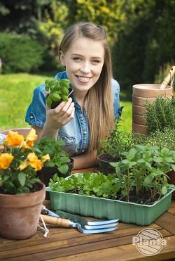 Przepikowane siewki przed przesadzeniem do ogrodu należy zahartować.