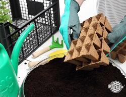 Przygotowując rozsady potrzebujemy podłoże, nasiona i doniczki.