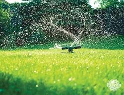 Zbyt częste podlewanie trawnika nie pobudza roślin do rozrostu systemu korzeniowego. Skutkuje to niską odpornością na brak wody.