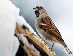 Śnieżna zima to trudny okres dla ptaków.