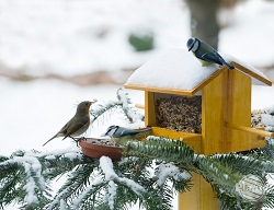 Ptaki chętnie zaglądają do ogrodów, w których jest ustawiony karmnik.